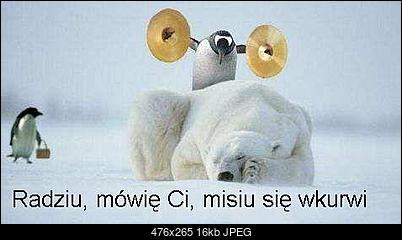 Funny fotos, kawaly... itp. - jeszcze sie tak nie usmialem :)-misio.jpg.jpg