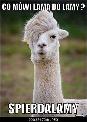 Funny fotos...-e158527596_co_mowi_lama_do_lamy_.jpg