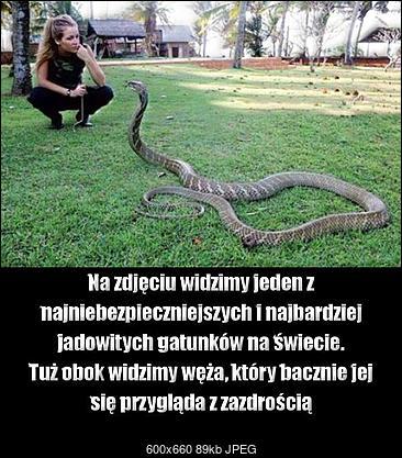 Funny fotos...-najbardziej-jadowity-gatunek-na-swiecie.jpg