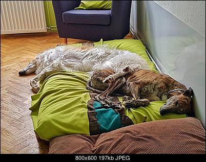 Psy-zdjecie-od-maciej-czaja-1-.jpg