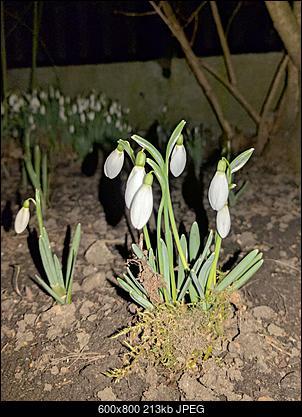 Oznaki wiosny-img_20170302_194252.jpg