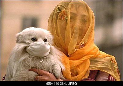 -muslimdoggy.jpg